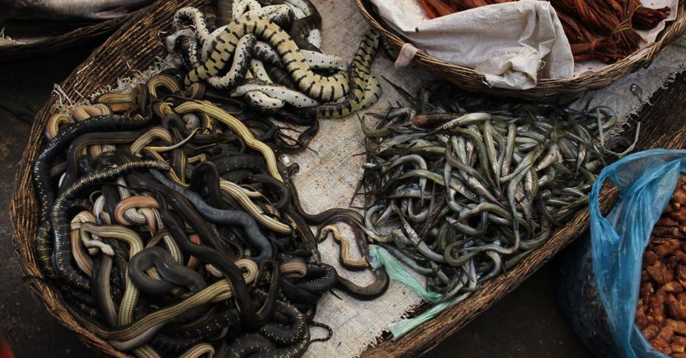 Market: Snakes