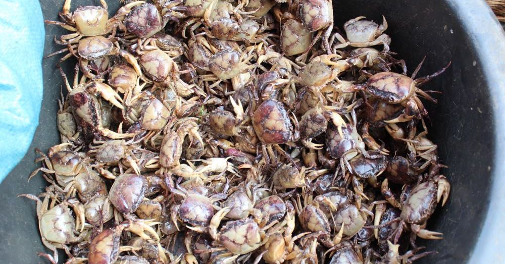 Market: Crabs