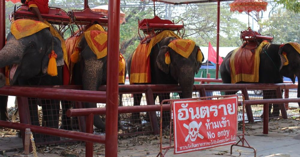 Elephant Interlude