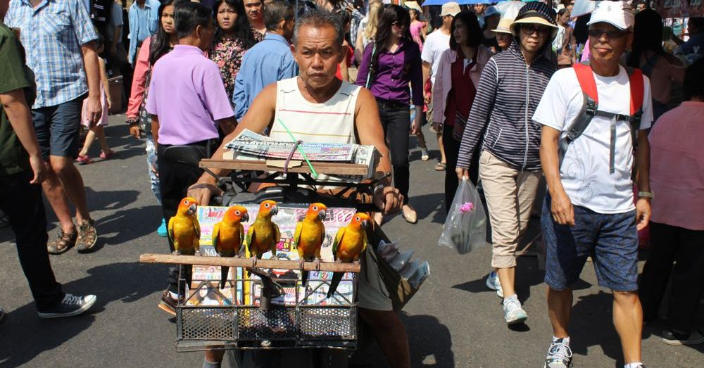 Magazine Vendor with Birds