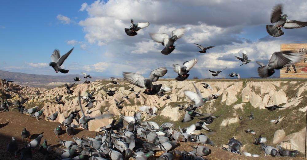 Pigeon Valley