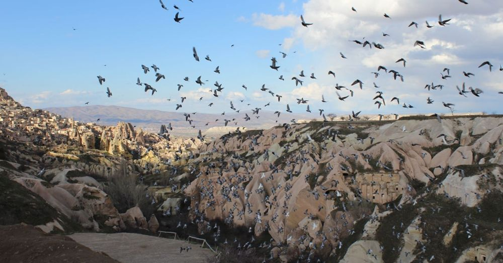 Pigeon Valley.