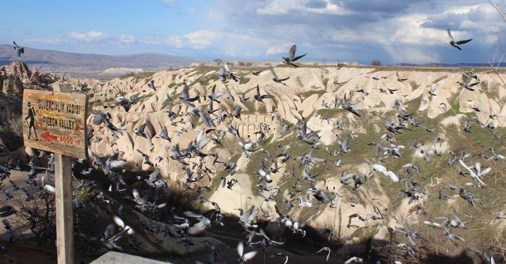 Pigeon Valley Overlook