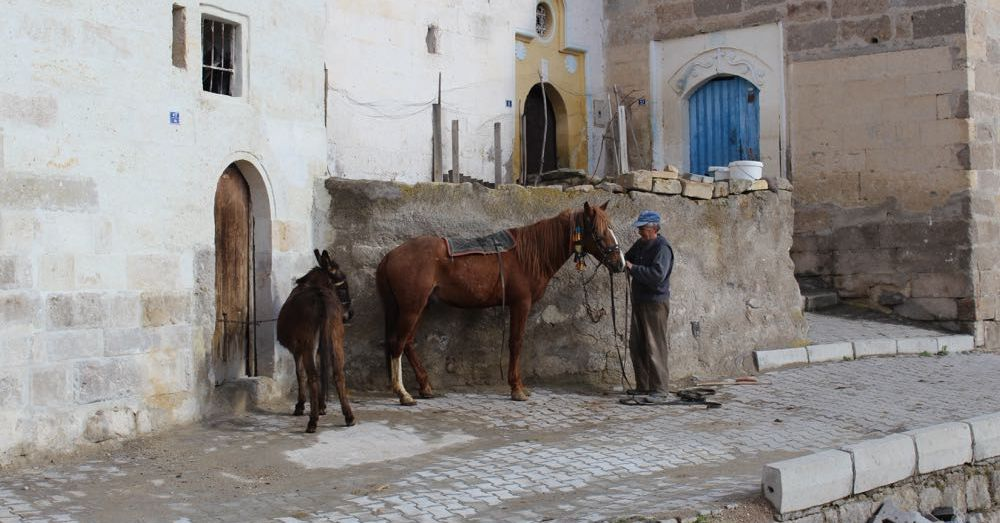 Man with horse and donkey