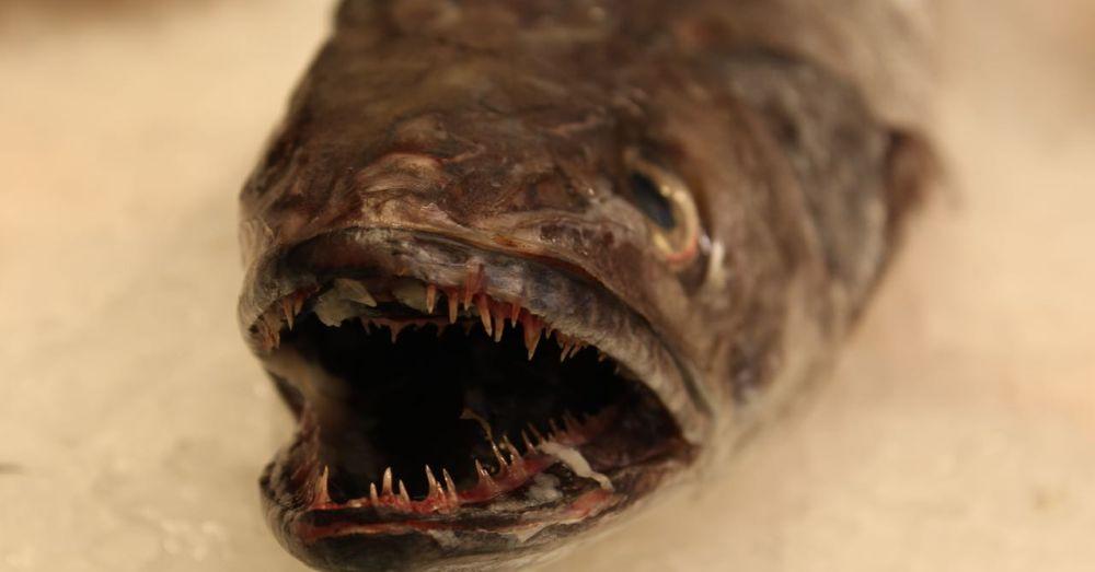 La Boqueria: Fish!