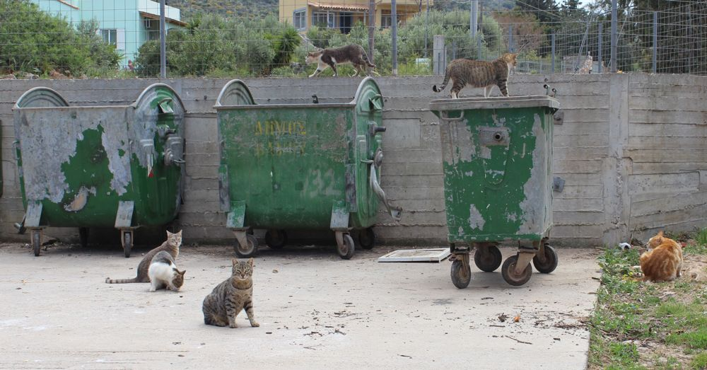 Gang of Cretan Cats