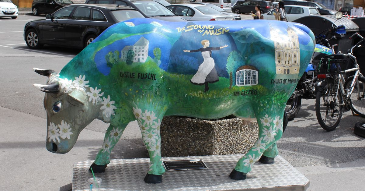 Sound of Music Cow