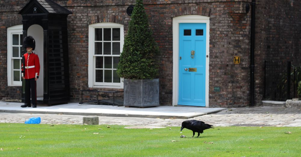 Queen's Guard and a Raven on Tower Green