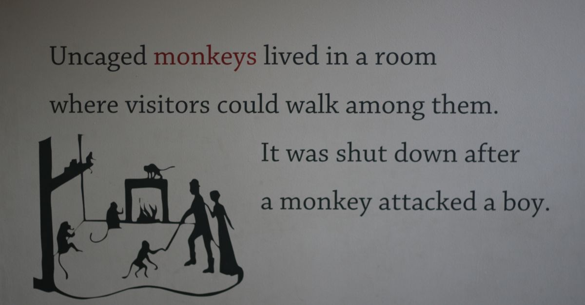 Monkeys ruin everything.