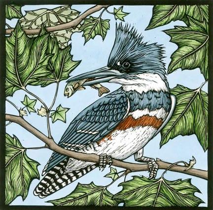 Belted Kingfisher.jpg
