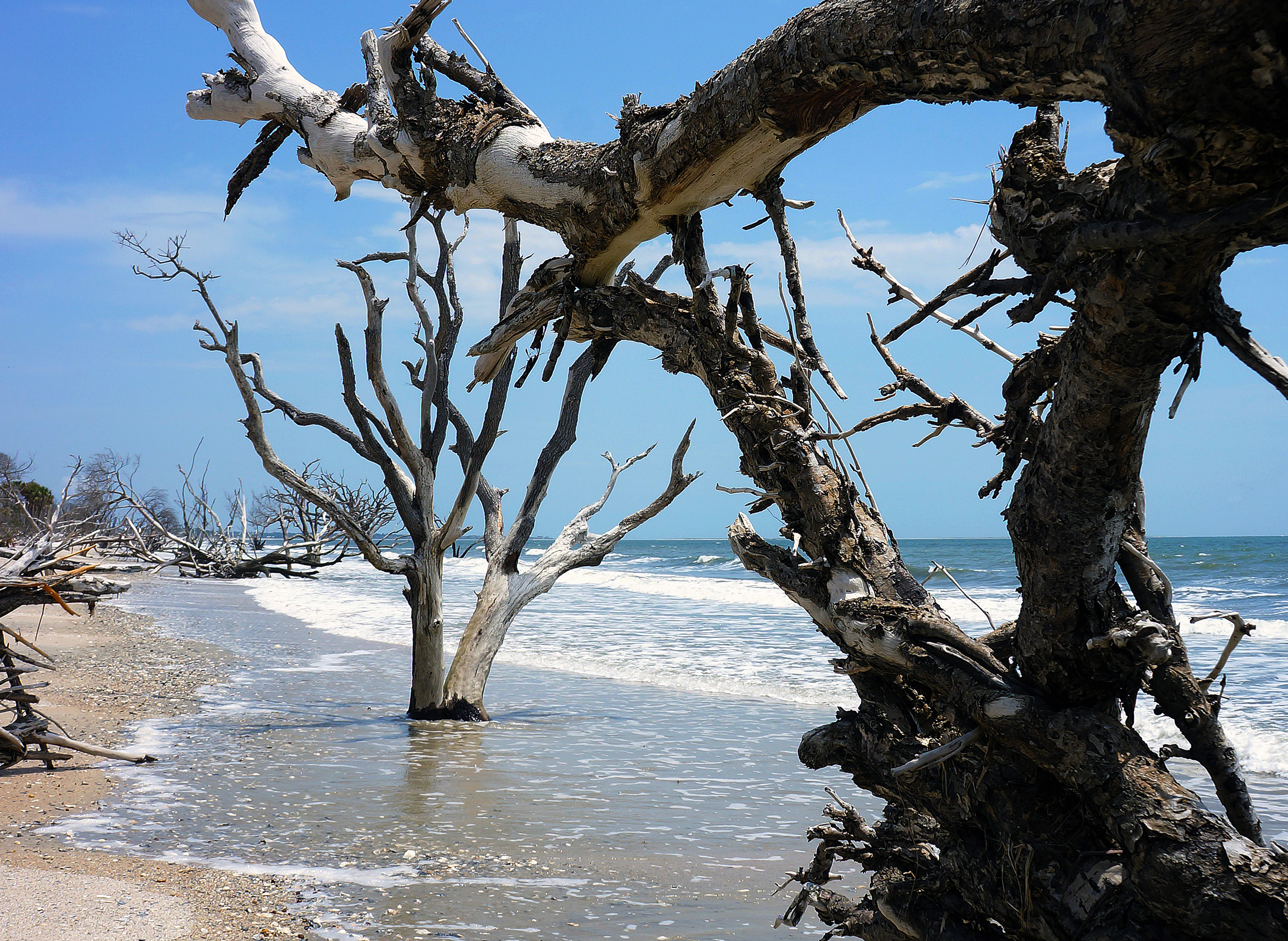 IOA_Edisto_Hammock_Tree_Beach_Detail.jpg