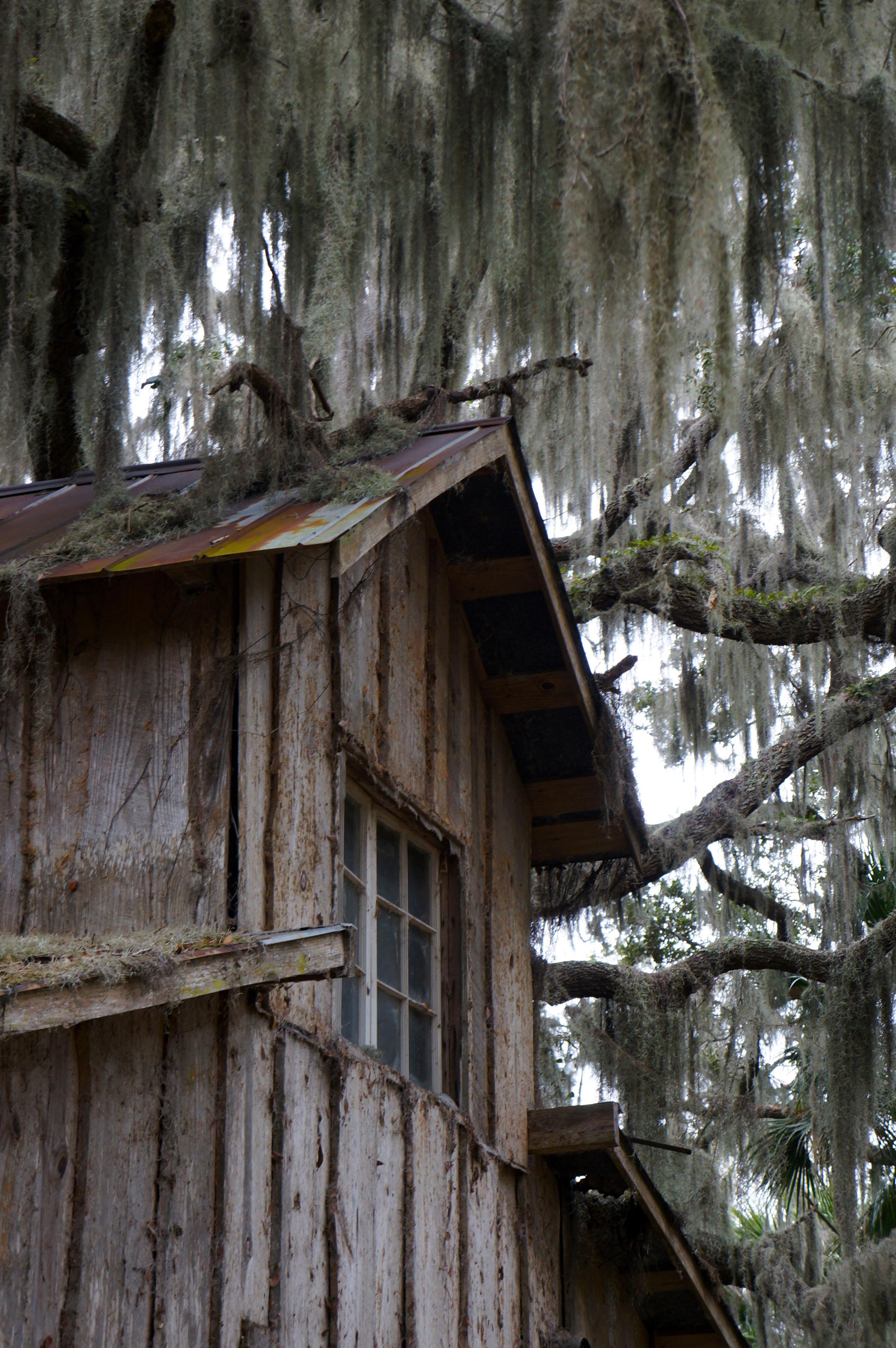 _IOA_Ossabaw_Hurricane_Cottage_Moss.jpg