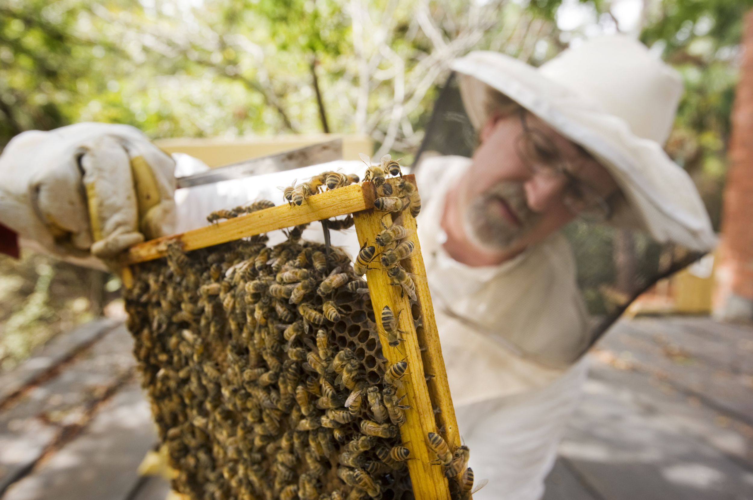 IOA_Tybee_Fleming_Hives_Honeycomb-Resize.jpg