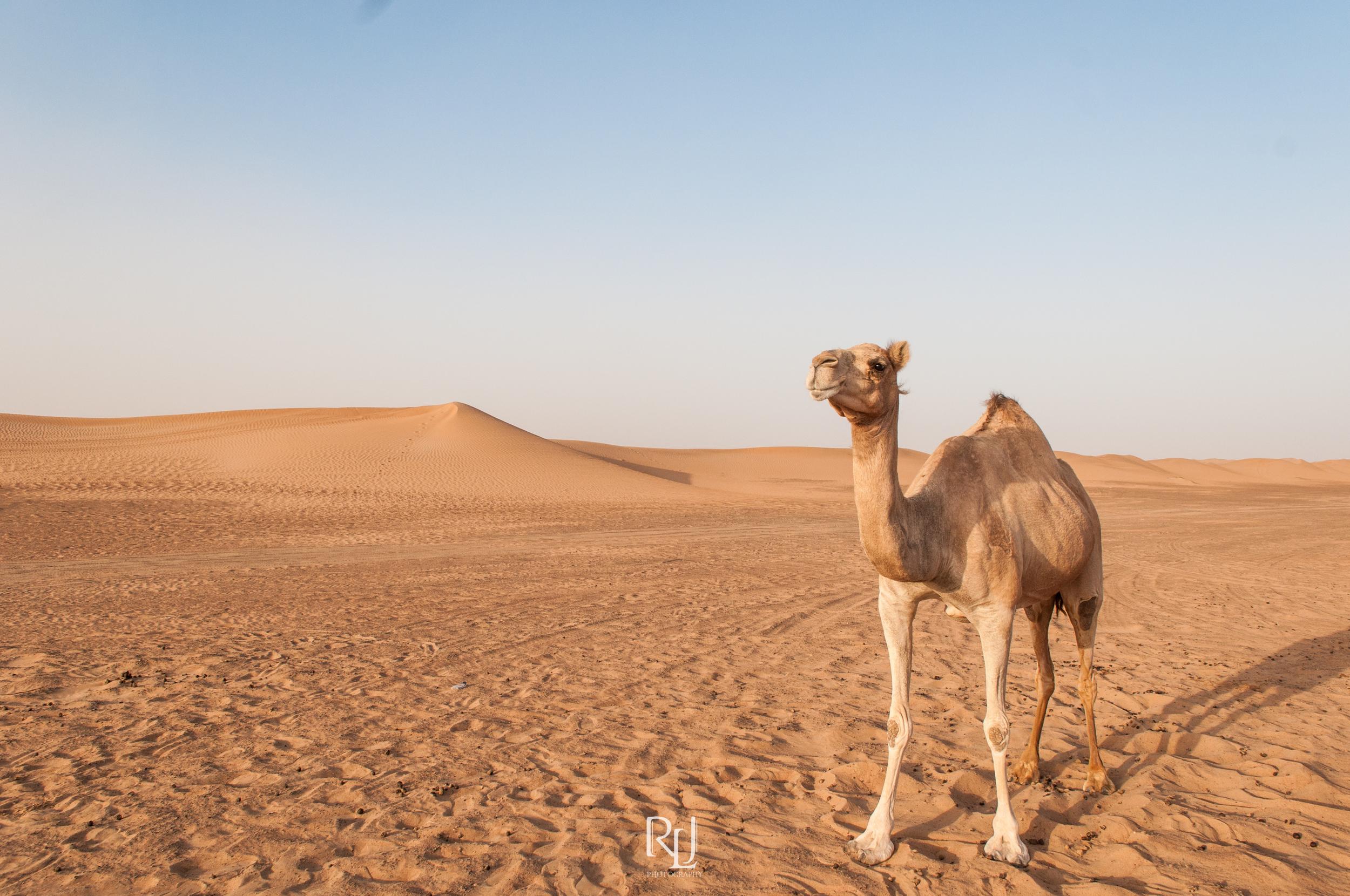 UAE15-08.jpg