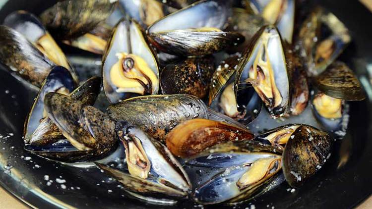 steamed mussels 1.jpg