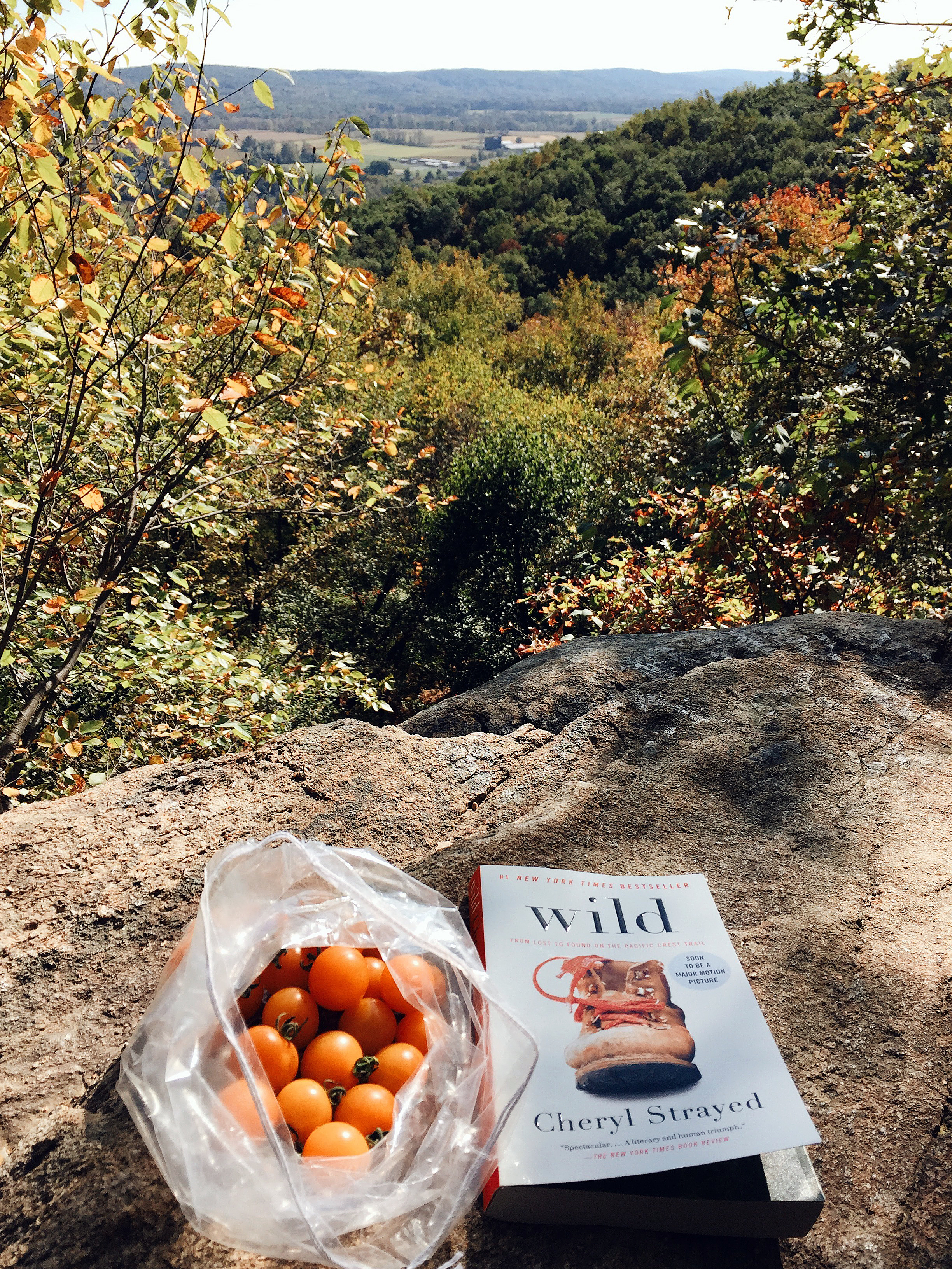 Sunday -- before I destroyed my phone and actually had time to read (and eat delicious locally picked orange cherry tomatoes)