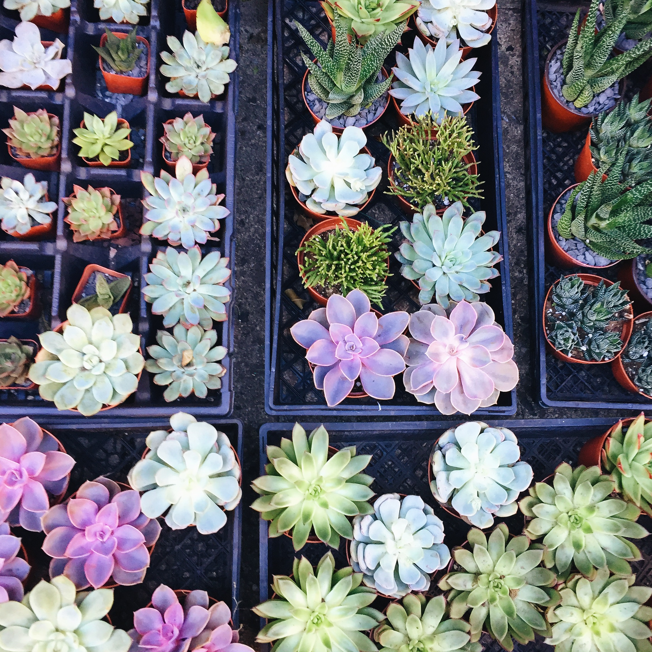 """the prettiest succulent selection, spotted at""""Noble Plants"""" in the flower district! (Chelsea, NY)"""