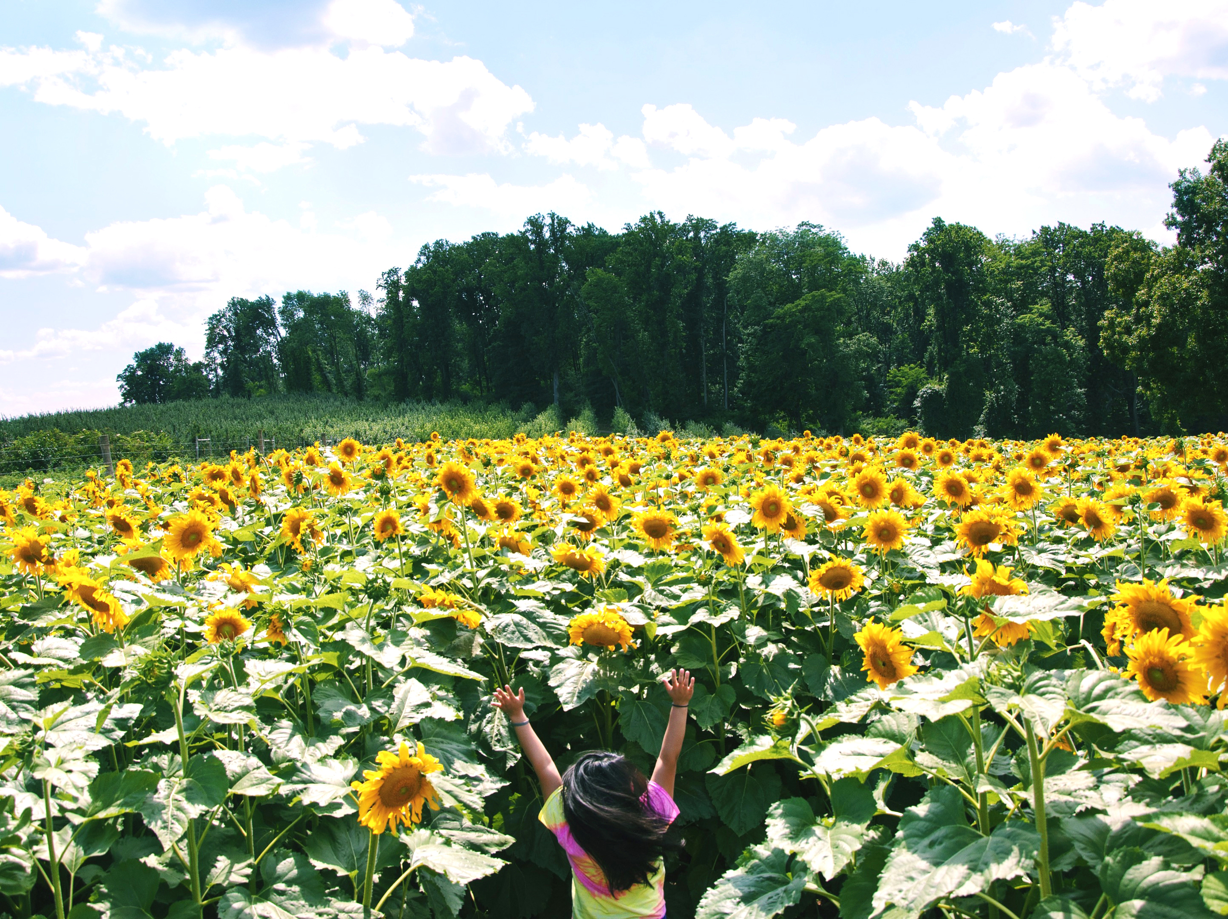 amy_chen_design_sunflower_maze_1.jpg