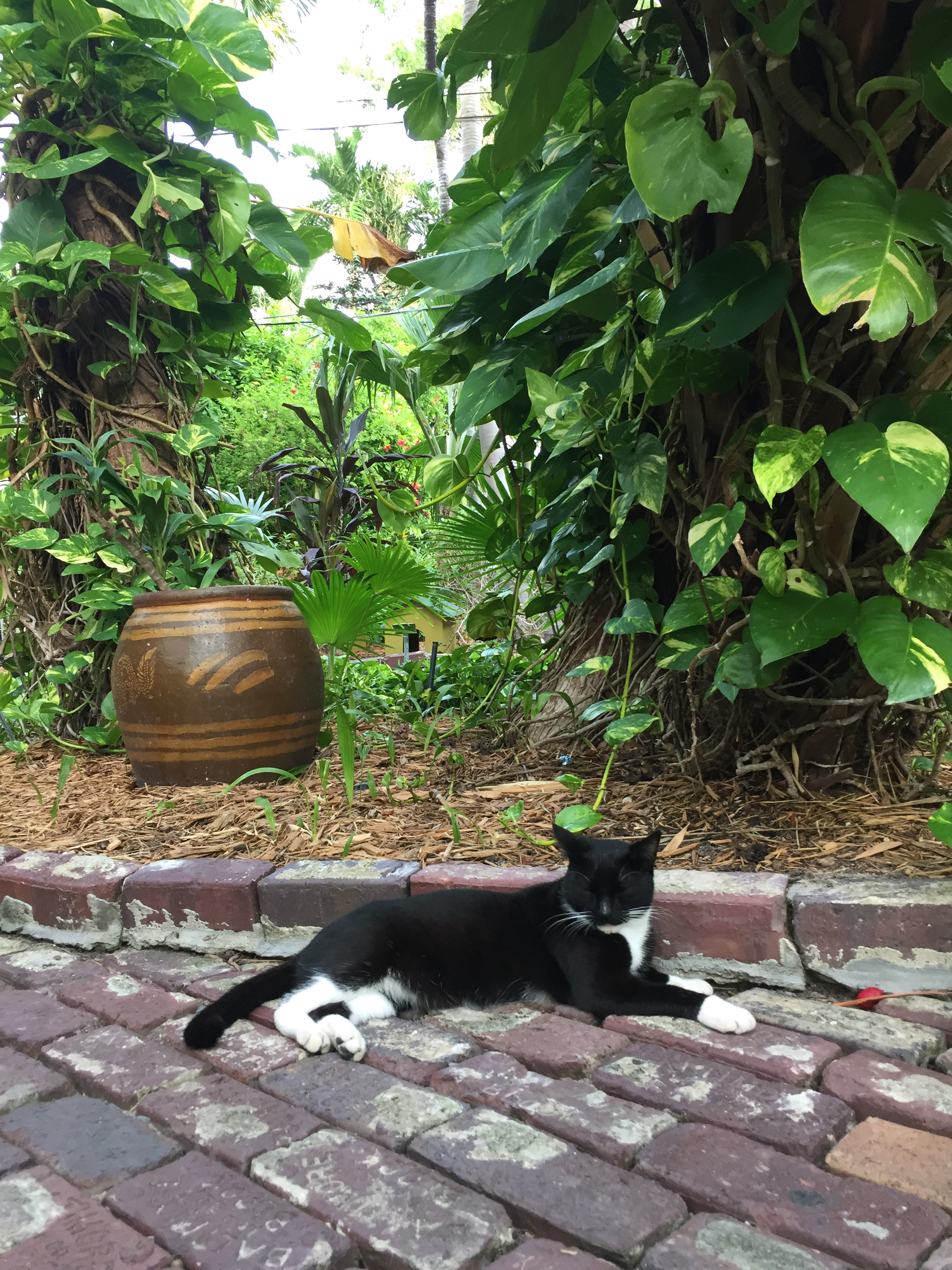 amy_chen_design_ernest_hemingway_house_key_west_cat.JPG