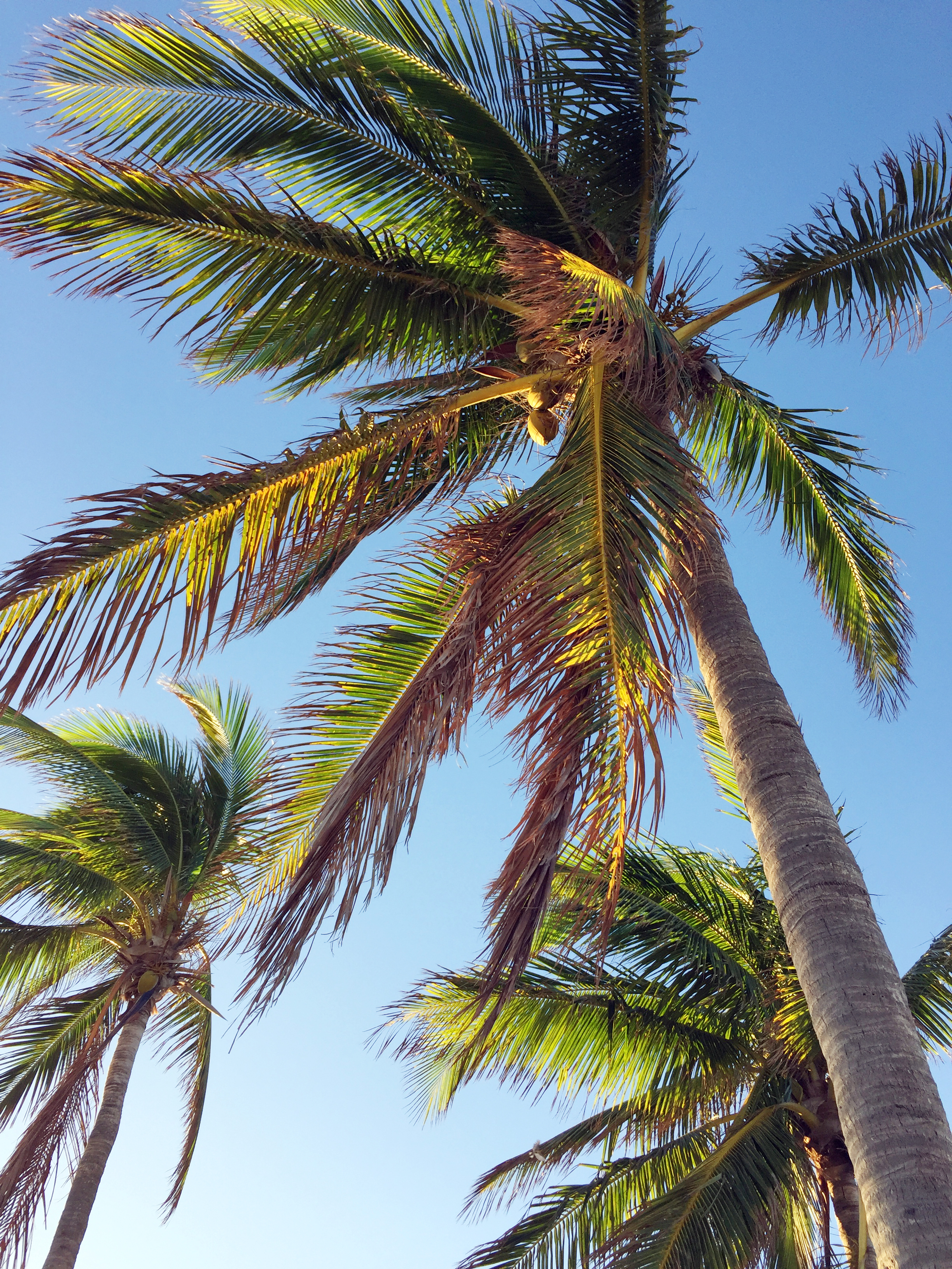 amy_chen_design_key_west_higgs_beach_palm_trees.JPG