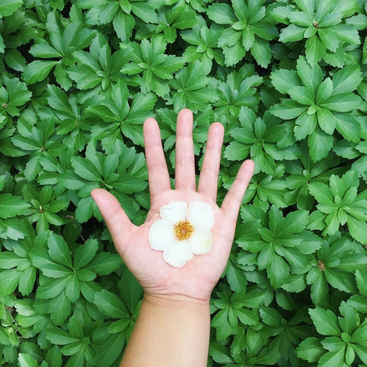 amy_chen_design_willowwood_arboretum_flower