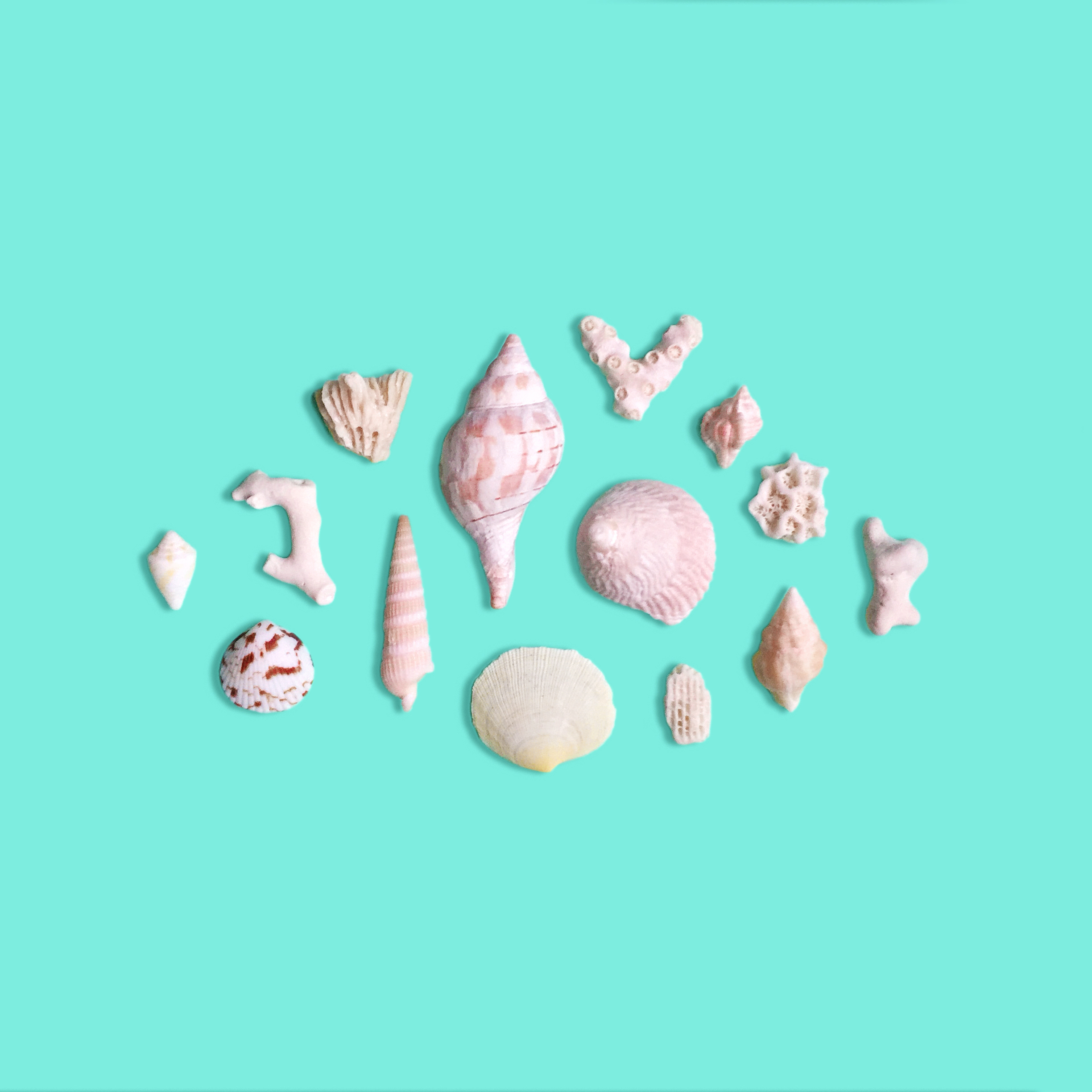 amy_chen_design_key_west_florida_seashell_collection.jpeg