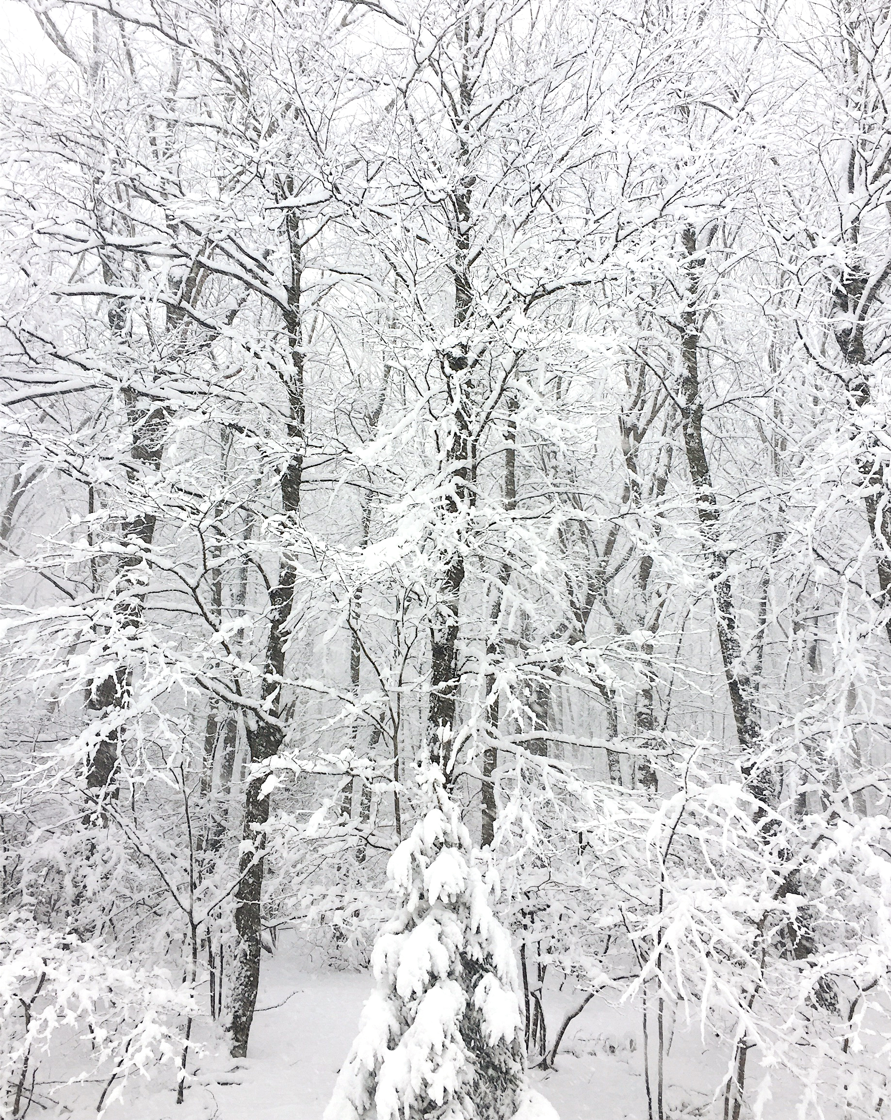 amy_chen_design_blog_winter_white_woods.jpeg