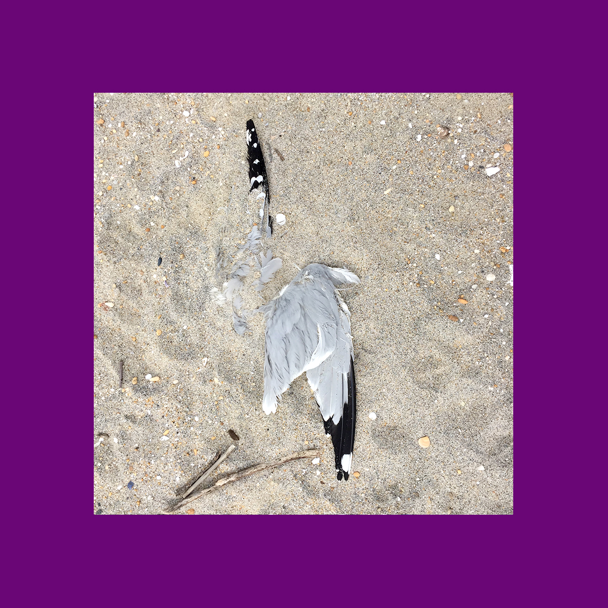 amy_chen_design_surfrider_asbury_park_new_jersey_beach_clean_dead_seagull.jpg