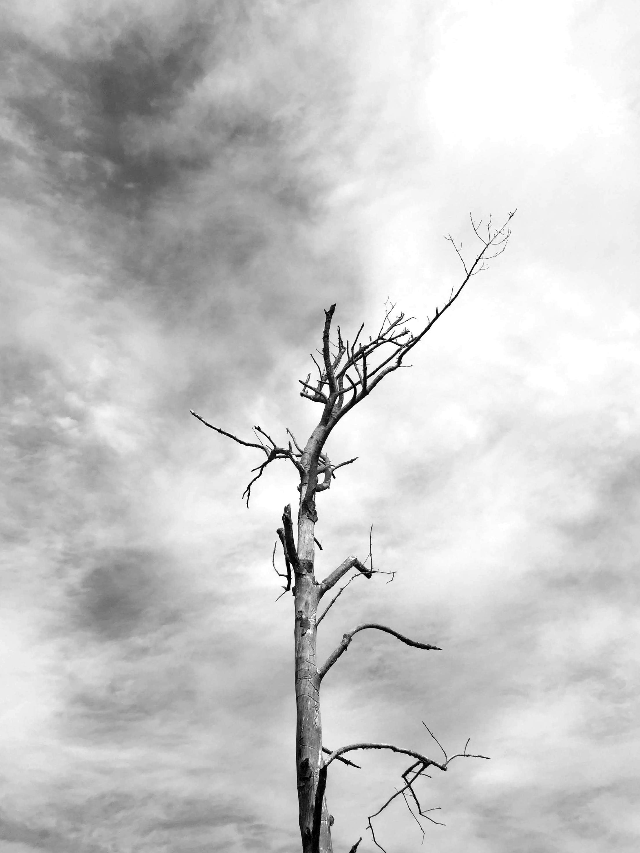 amy_chen_design_sandy_hook_beach_clean_dead_tree.JPG