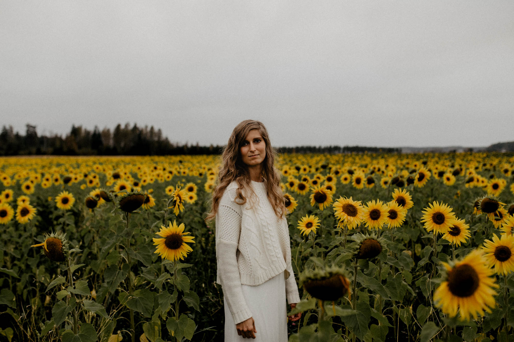 Sunflower Field Photo Session