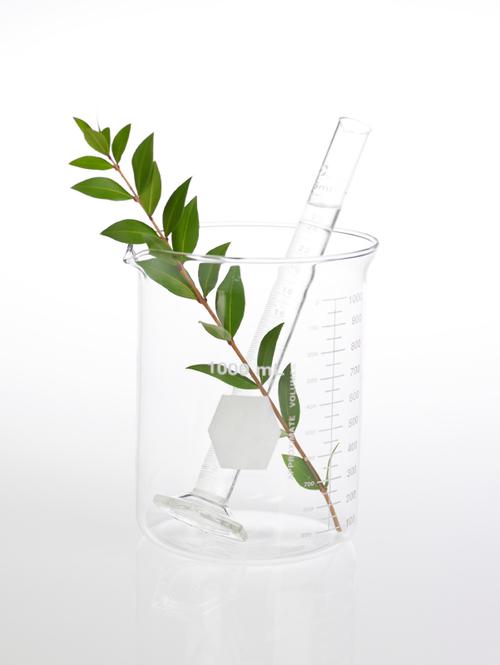 Becher en verre contenant une plante verte et une éprouvette
