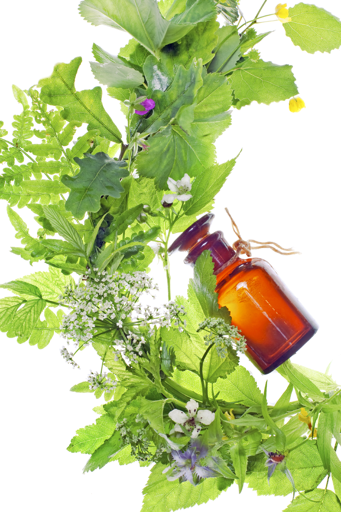 Essential oil in a glass bottle surrounded by green plants