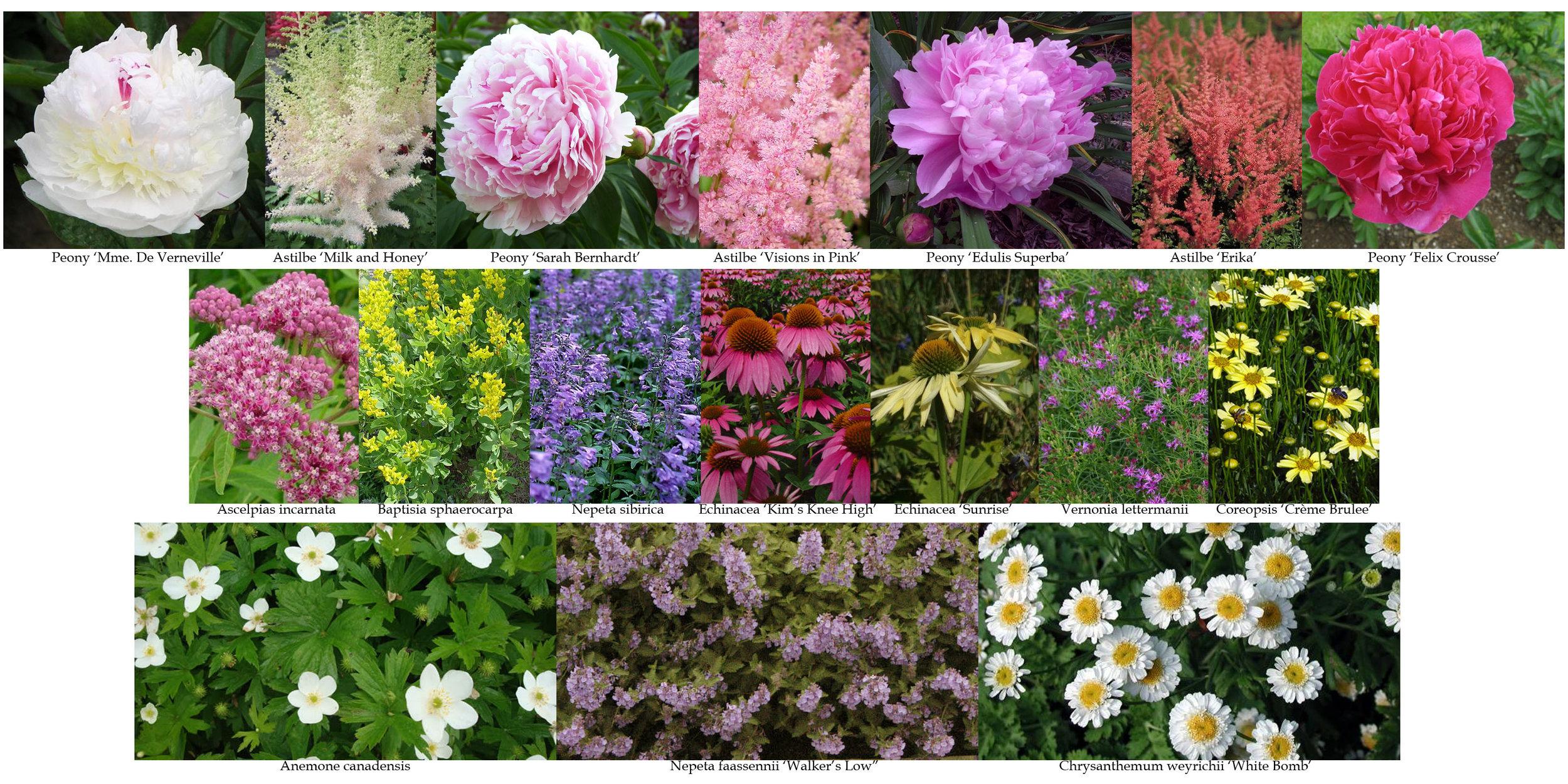 Osman_plant_selection copy.jpg