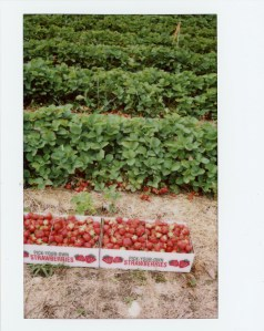 strawberriesboxes.jpg
