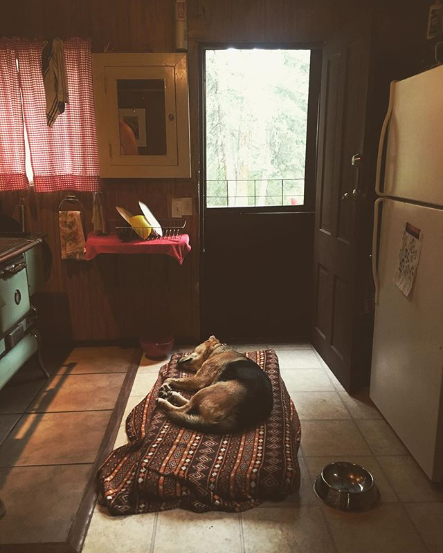 Naps in the kitchen. #troutlakecolorado  #cabinnaps
