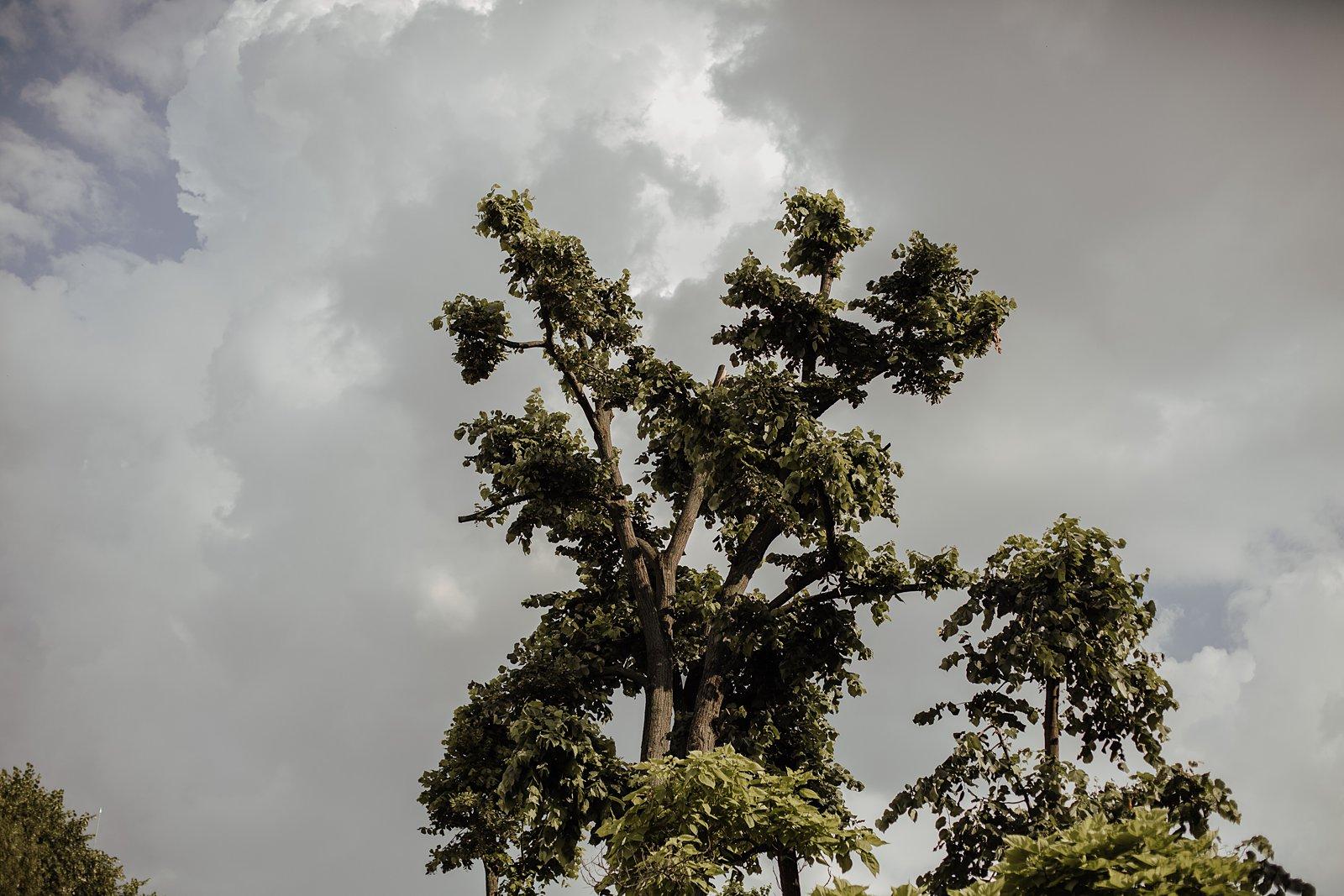 sky-and-tree-boho-wedding