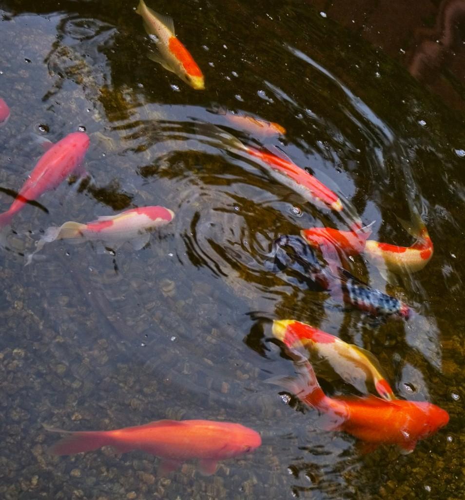mark bowering-garden-003fishy 954x1024.jpg