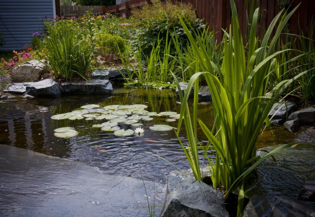 mark bowering-garden-046 1024x708.jpg
