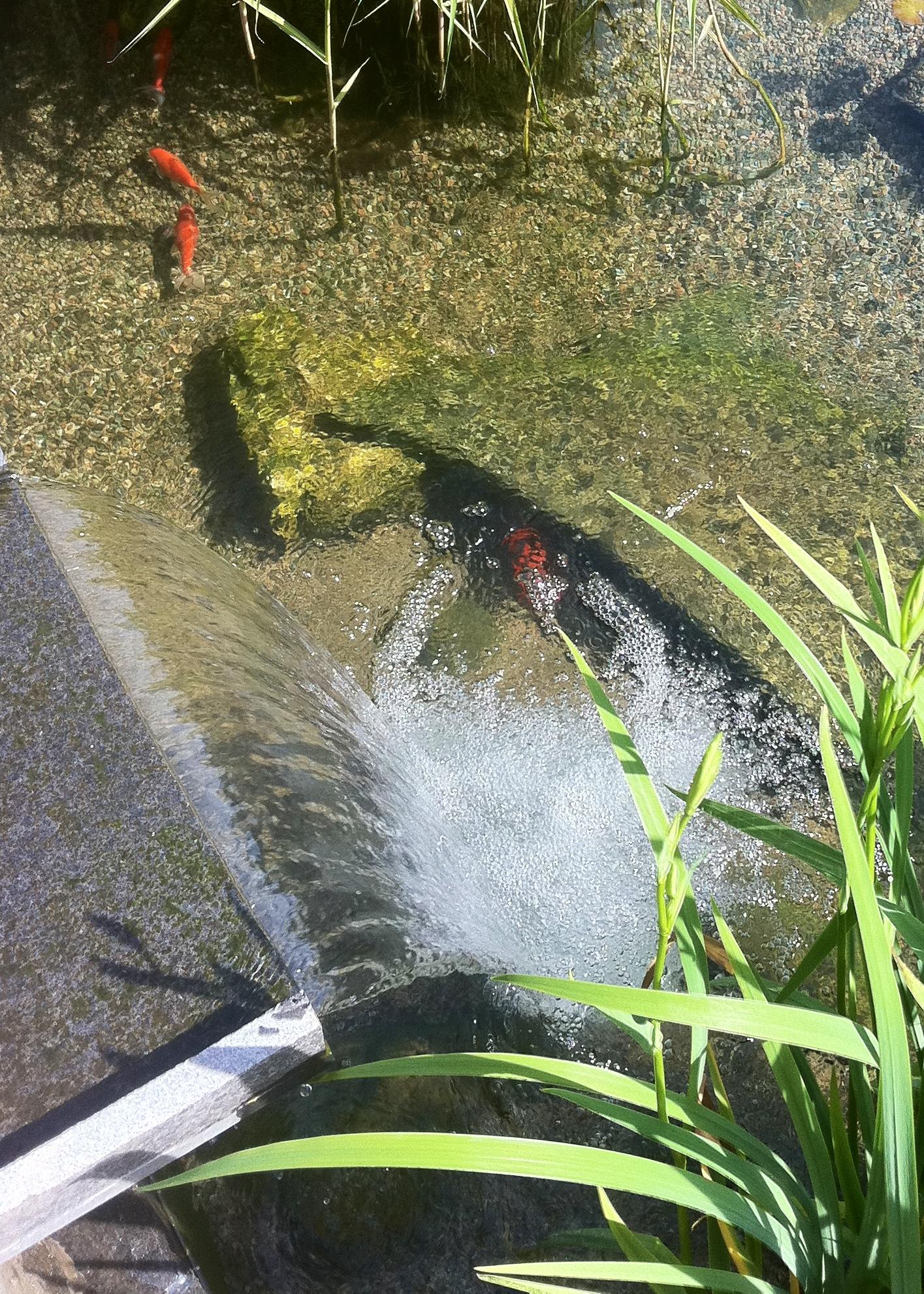macdonald pond waterfall.jpg