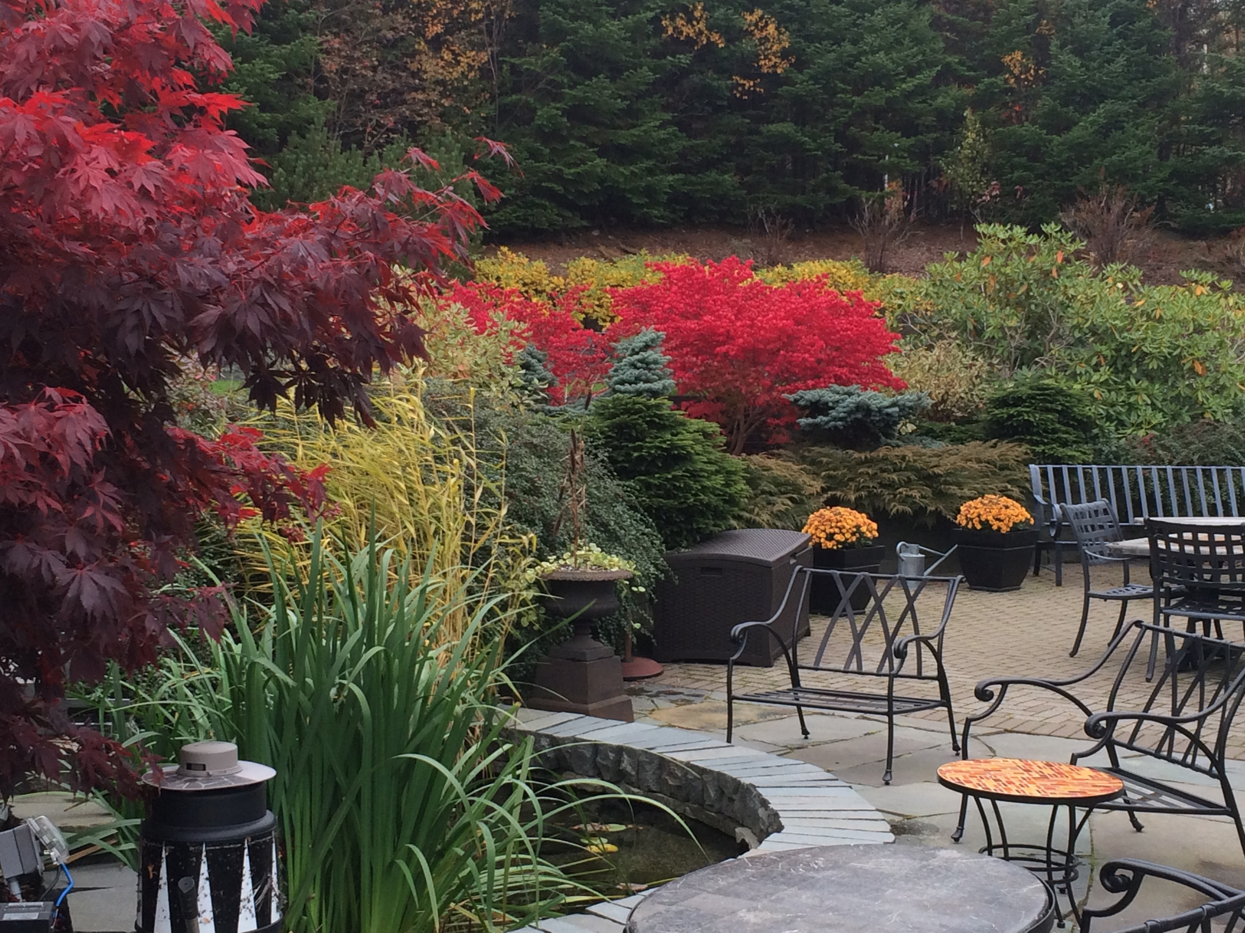 Rear Garden in the Fall.jpg