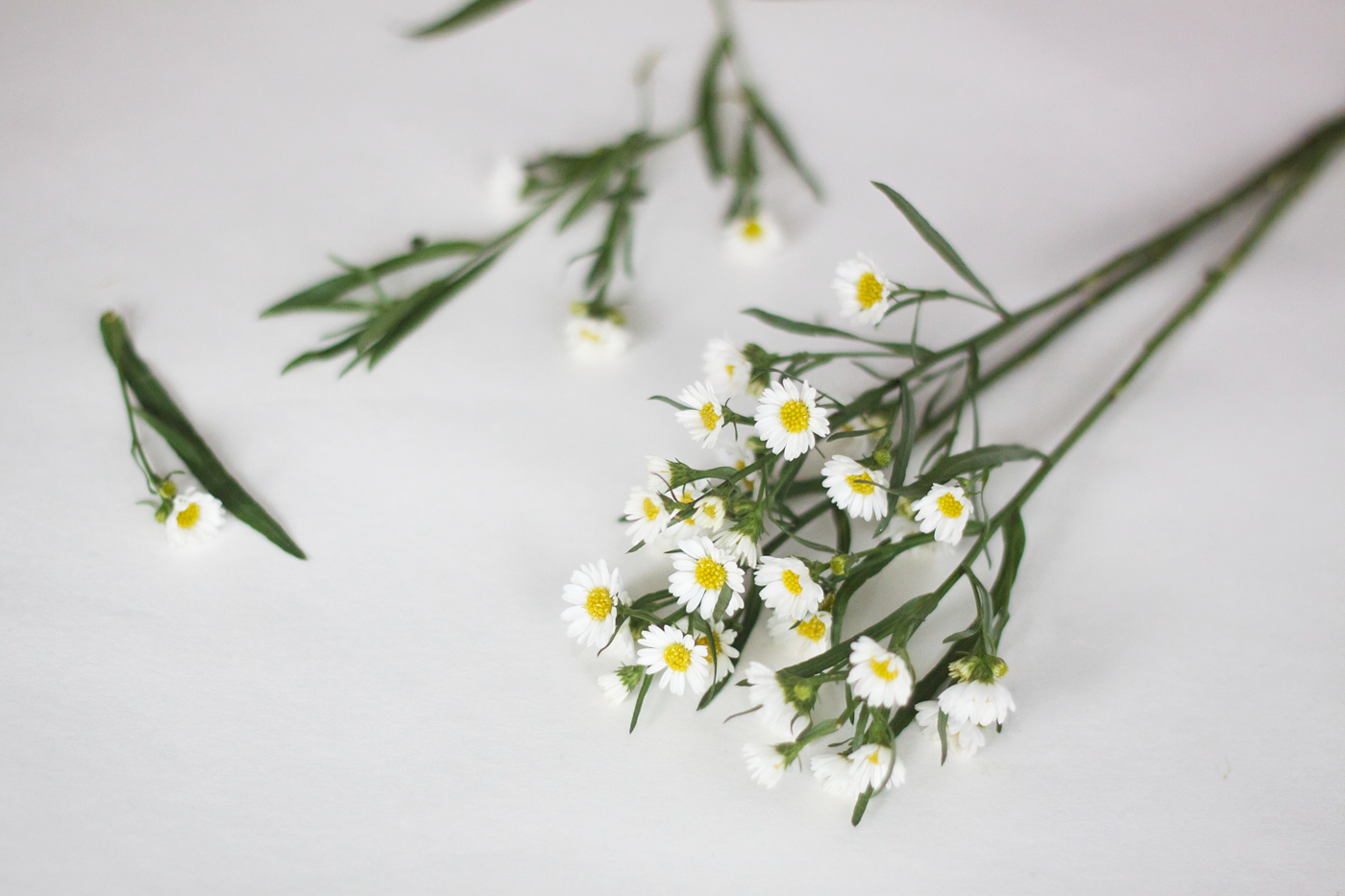 White Aster Posy with Studio Carta Ribbon, cutting flowers, by Justine Hand.jpg