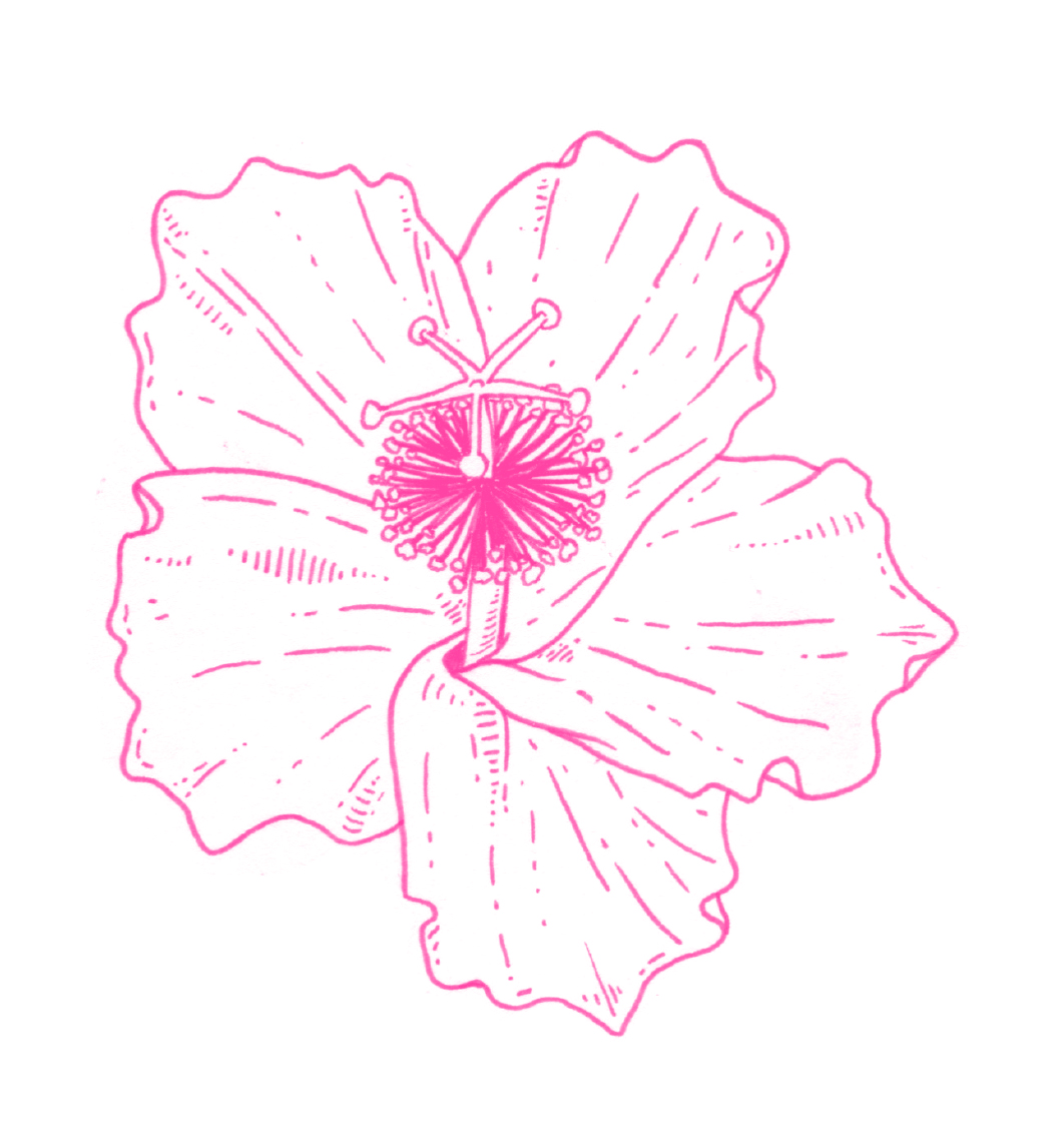 website_hibiscus1.jpg