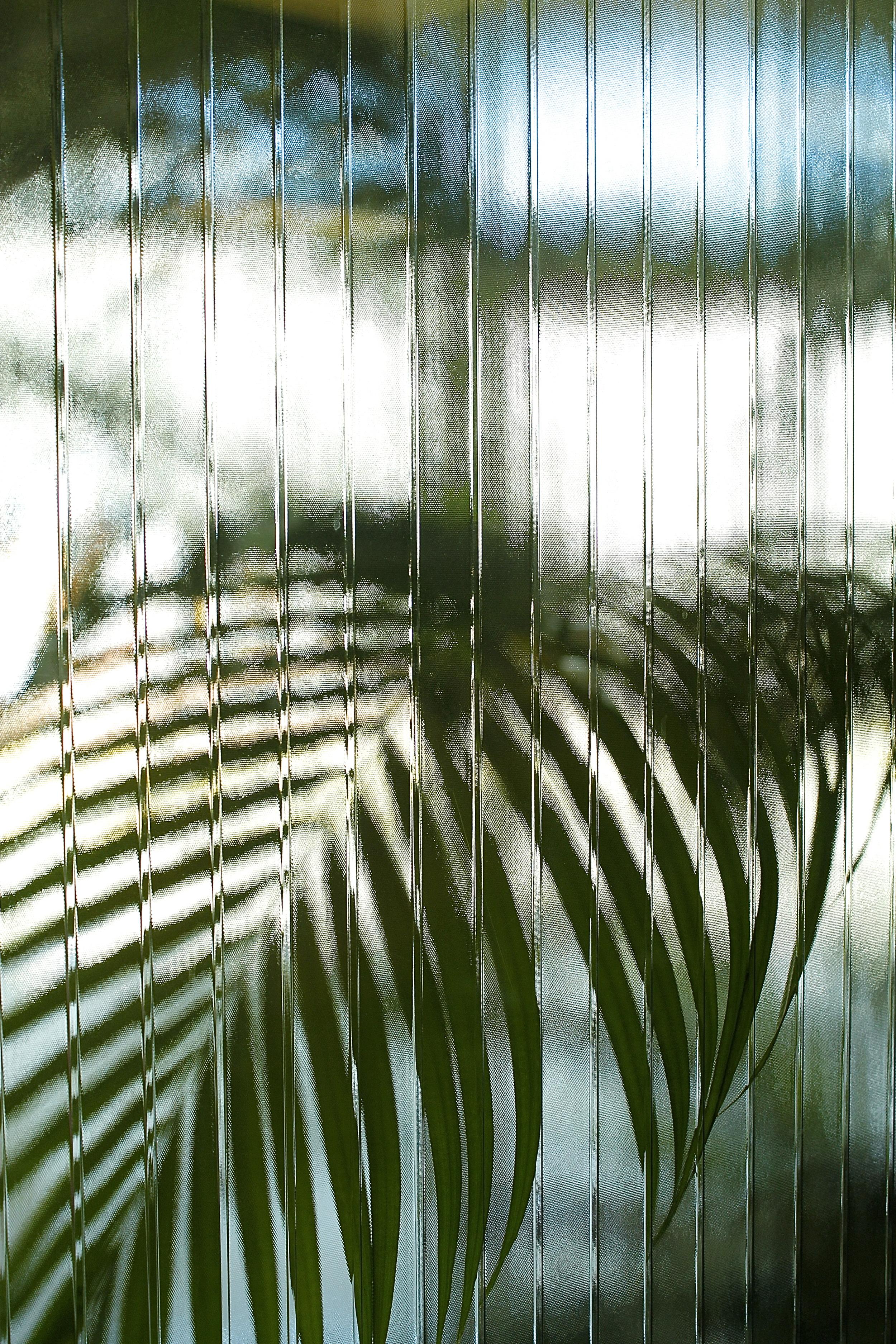 Glasswallplant.jpg