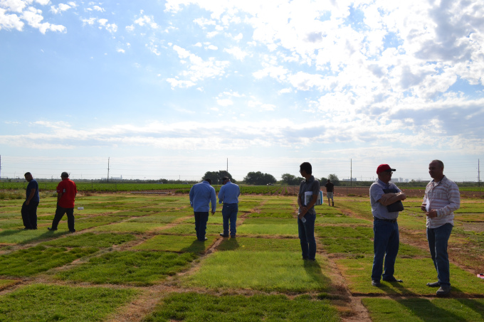 Travis Culpepper (far right) and his group learning about different turf species water requirements on drip.