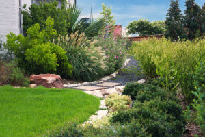 Dividing landscape into one part turf, one part natural plants and one part permeable hardscape can save water. (Texas A&M AgriLife photo by Gabe Saldana)