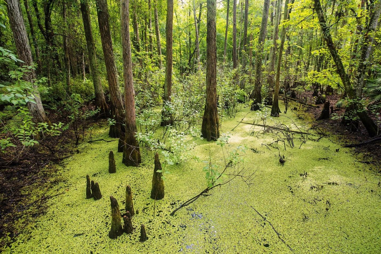 Image Source: National Park Foundation