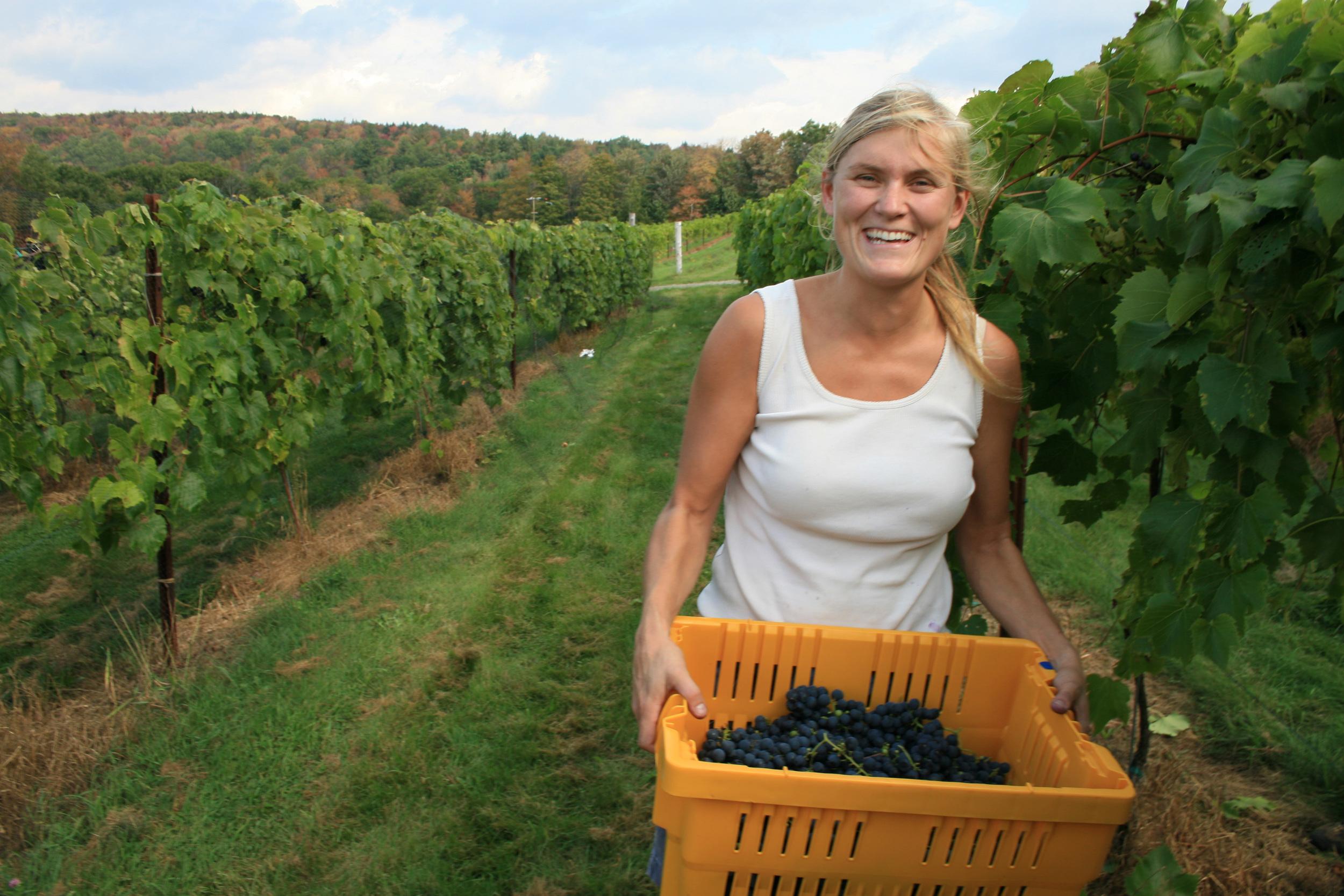 Harvest at Fresh Tracks Farm