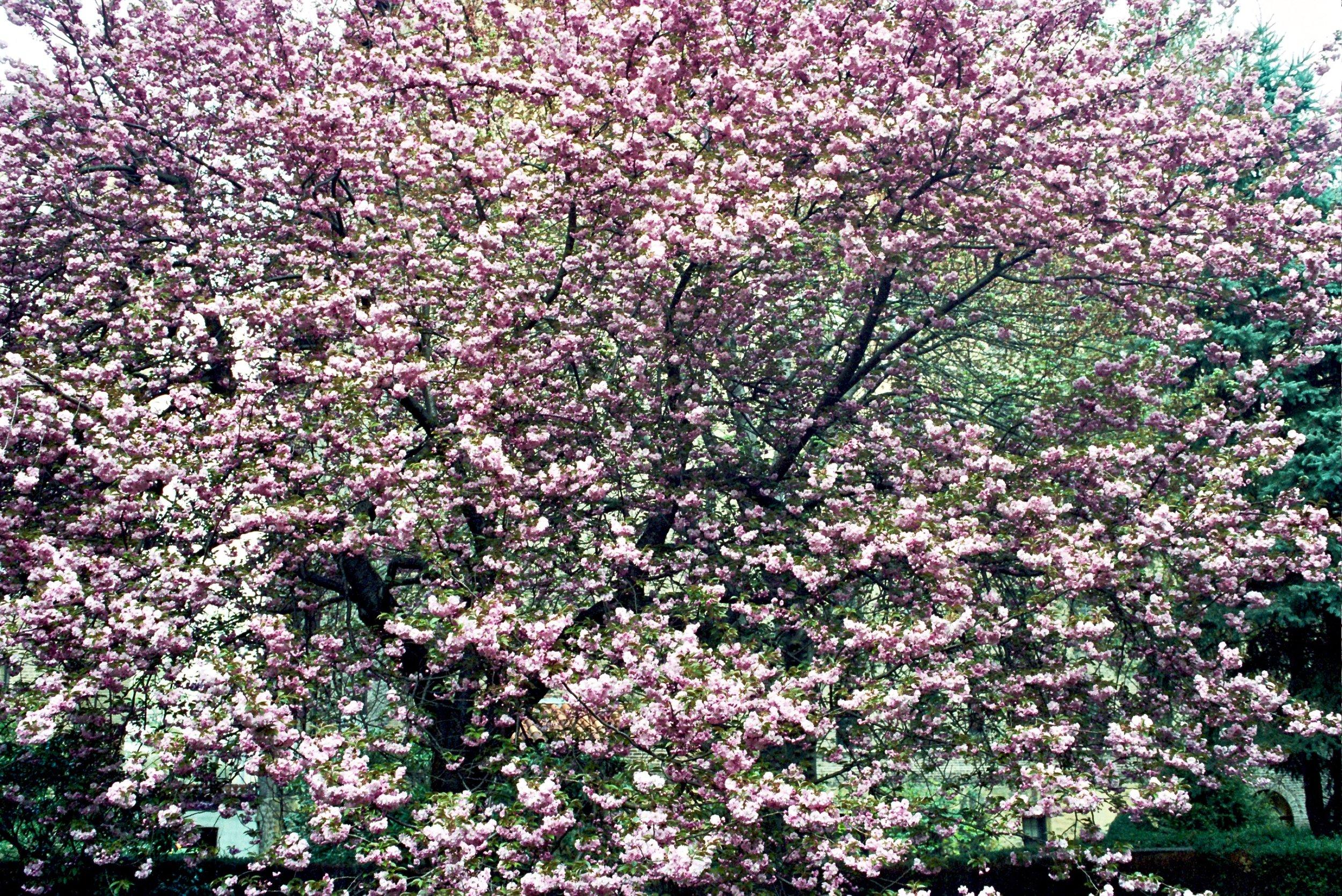 Larchmont, NY  2004