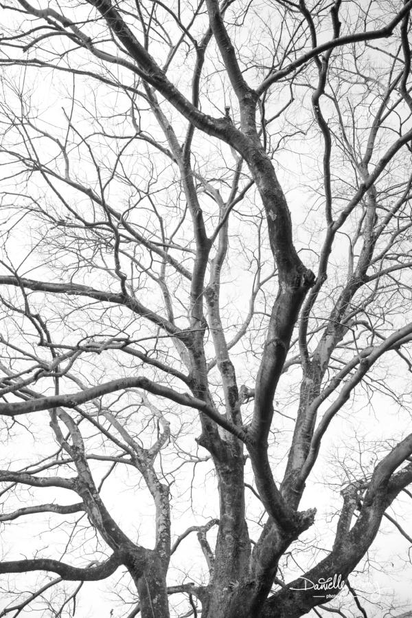 Kozaemon Heritage Tree Series 2