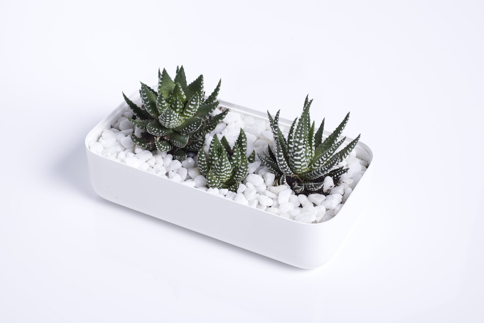 whiteboxlab_planter-2.jpg